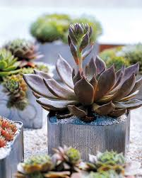 Potted Garden Ideas Container Garden Ideas For Any Household Martha Stewart