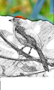 converting image into pencil sketch effect in android stack overflow