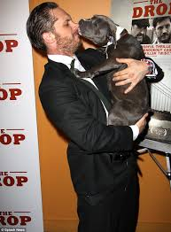 Ed Hardy Meme - tom hardy s pit bull co star zora licks his face at screening of the