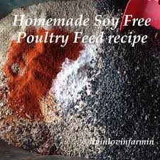 homemade poultry feed for chickens and turkeys soy free