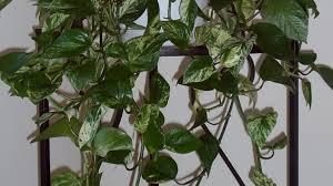 Buy House Plants Compelling Figure Railing Planters Dreadful Fake Tropical Plants