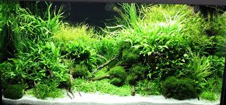 Tank Aquascape Marcel Dykierek And Aquascaping Aqua Rebell
