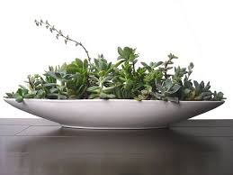 Ceramic Succulent Planter by Succulent Mix 21