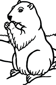 groundhog coloring pages activities preschool vector cartoon