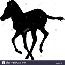 mustang horse silhouette horse silhouettes stock photos u0026 horse silhouettes stock images