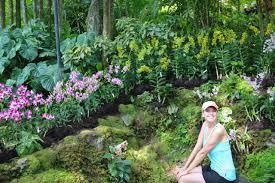 singapore u0027s orchid garden a flower lovers heaven bob around