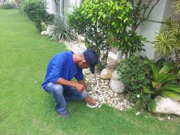 pest control expert services l termite control l termite baiting