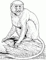 animal monkey to color monkey pictures christmas coloring pages