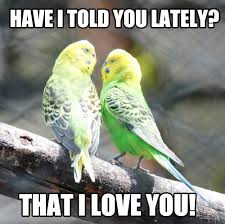 Cute I Love You Meme - looking for i love you memes or simply a cute romantic memes for