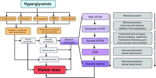 update on animal models of diabetic retinopathy from molecular