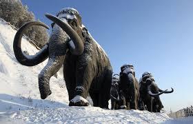 scientists u0027to clone u0027 extinct wooly mammoth amazing prehistoric