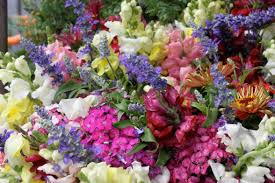 List Of Flowers by Alphabetical List Of Flowers Magiel Info