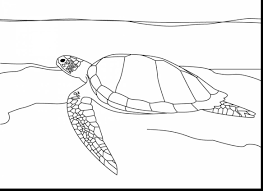 remarkable sea turtle drawing with sea turtle coloring page