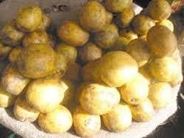 cuisiner le fruit de l arbre à fabrication du jus de cassemangue ou cassemango afrik cuisine