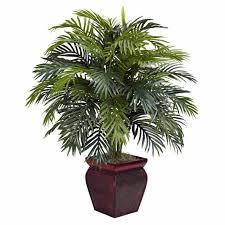 tall house plants uk