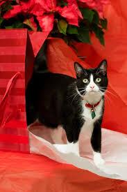 cat christmas christmas cats