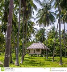 small bungalow at the palm trees plantation stock photo image
