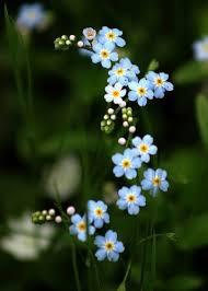 25 trending flower photography ideas on beautiful