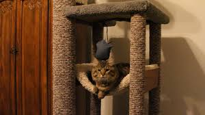 Cool Cat Scratchers How To Diy Heavy Duty Cat Tree Tower Climber For A Maine Coon