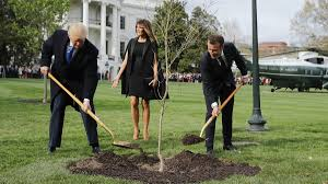 miami gifts delivered by gifttree macron s gift tree from white house lawn ambassador says it s