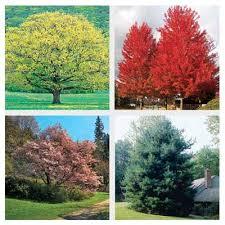 fast growing shade trees taleghan us