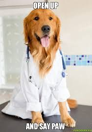 Dog Doctor Meme - open up and say paw doctor dog make a meme