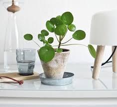 plante verte bureau 268 best coup de projecteur sur les plantes d intérieur images on