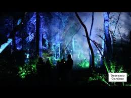 enchanted forest of light tickets enchanted forest of light at descanso gardens la cañada