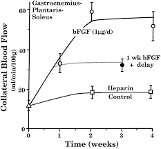 basic fibroblast growth factor increases collateral blood flow in
