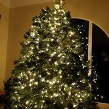 best christmas trees s best christmas trees pumpkins temp closed pumpkin