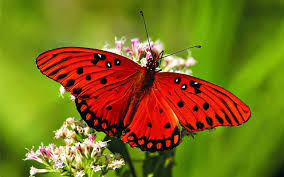 red butterfly on a flower 4247514 2560x1600 all for desktop