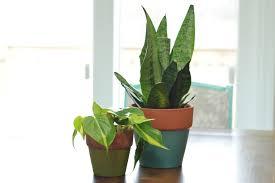 a peek at my plants loving here
