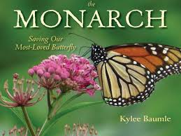 a butterfly feeder diy