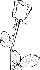 rose flowers coloring pages flower coloring pages of