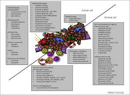 immune mediated mechanisms influencing the efficacy of anticancer