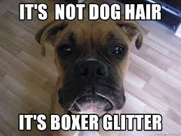 Funny Boxer Dog Memes - boxer energetic and funny dog animal and fur babies