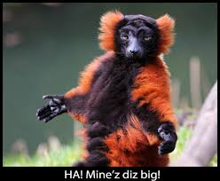 Lemur Meme - lemurs images red ruffed lemur wallpaper and background photos
