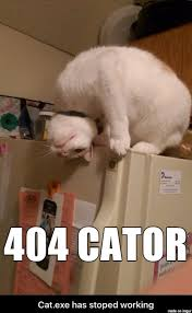 Working Cat Meme - 404 cator cat exe has stopped working meme on imgur