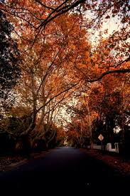 38 best wahroonga images on pinterest north shore real estates early morning colours wahroonga