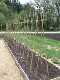 How To Grow Cucumbers On A Trellis Which Trellis Is The Best Trellis U2014 Seed Savers Exchange Blog