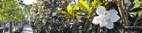 austin texas native plants tree farm u0026 nursery in austin tx d u0026 b tree company