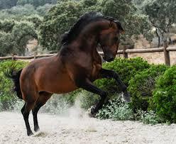 monte velho equo resort riding holidays lusitano horse finder