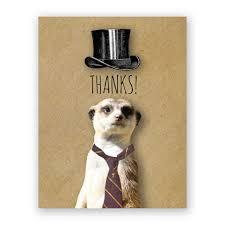 thank you meerkat card u2013 the mincing mockingbird u0026 the frantic meerkat