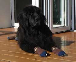 socks for traction indoor paw protection