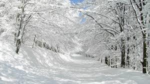 1920x1080 thick snow trees u0026 pretty path desktop pc and mac wallpaper