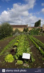 the kitchen garden in august at barrington court somerset stock