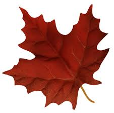 the canadian flag where does the maple leaf design come from