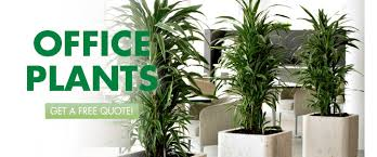 green plants plant rentals plants for rent interior plant service tx
