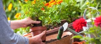 round rock monthly gardening checklist round rock garden center