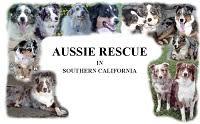 australian shepherd rescue california california dog rescues adopt your favorite breed today
